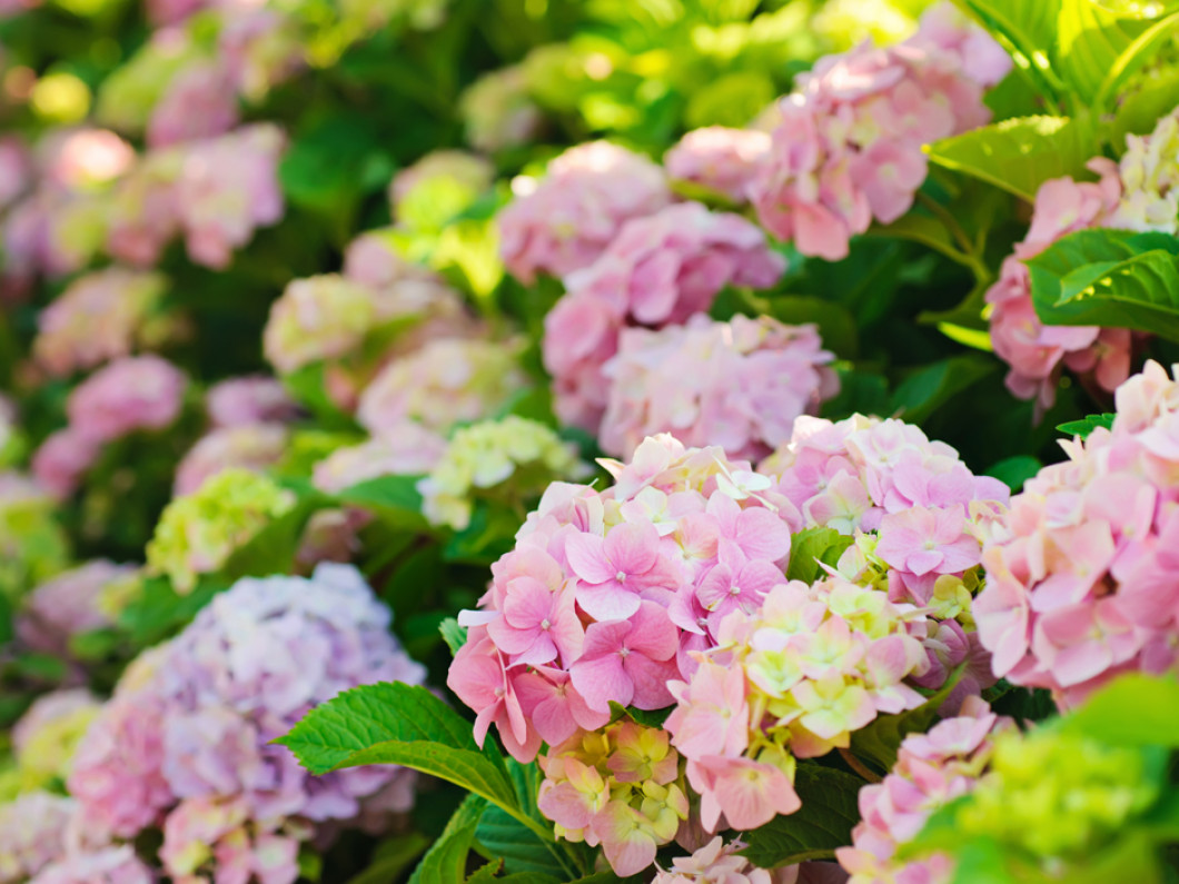 What flowers will grow best on your property?